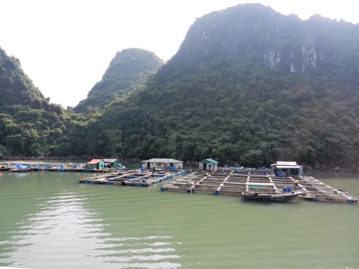 Vietnam 095