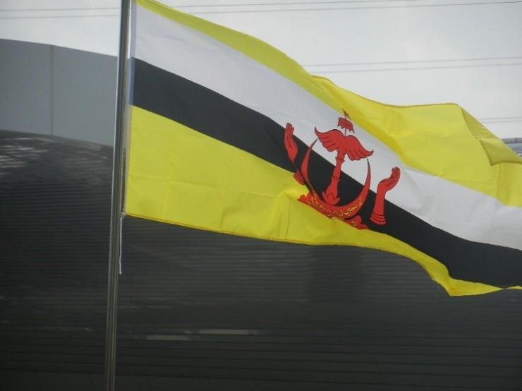 brunein lippu